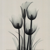 Tulips and Arum Lily Print van Marianne Haas