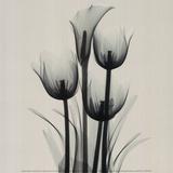 Tulips and Arum Lily Print van Marianne Haas