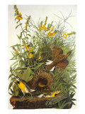 Meadow Lark Giclee Print by John James Audubon