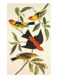 Louisiana Tanager, Scarlet Tanager Giclee Print by John James Audubon