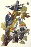 Pileated Woodpecker Lmina gicle por John James Audubon