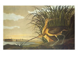 Courlis à long bec Reproduction giclée Premium par John James Audubon