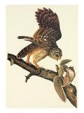 Barred Owl Schilderij van John James Audubon