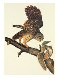 Barred Owl Giclee Print by John James Audubon