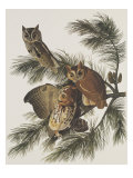 Little Screech Owl or Mottled Owl Poster by John James Audubon