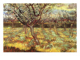 Apricot Trees In Blossom Poster by Vincent van Gogh