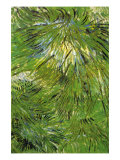 Grass Poster by Vincent van Gogh