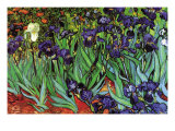 Irises Photo by Vincent van Gogh
