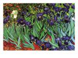 Lirios Láminas por Vincent van Gogh