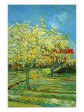 Vincent van Gogh - Orchard with Cypress Umělecké plakáty