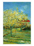 Orchard with Cypress Poster by Vincent van Gogh