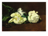 Still Life, White Peony Print by Édouard Manet