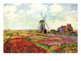 Tulips of Holland Prints by Claude Monet