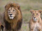 Lion Pair (Panthera Leo), Masai Mara National Reserve, Kenya, East Africa, Africa Photographic Print by Sergio Pitamitz