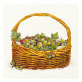 Basket Of Gooseberries Art by Bambi Papais