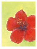 Red Hibiscuis Giclee Print by Flavia Weedn