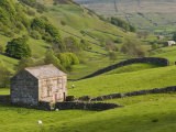 Typical Stone Barns Near Keld in Swaledale, Yorkshire Dales National Park, Yorkshire, England Photographic Print by John Woodworth