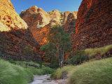 Domes, Bungle Bungle, Purnululu National Park, Kimberley, Western Australia, Australia, Pacific Photographic Print by Jochen Schlenker