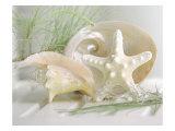 Cali Starfish IV Premium Giclee Print