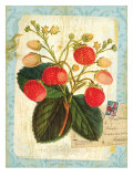 Vintage Botanical Garden Print Giclee Print by Bessie Pease Gutmann