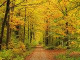Forest in Autumn, Schoenbuch, Baden-Wurttemberg, Germany, Europe Fotografisk tryk af Jochen Schlenker