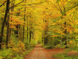 Forest in Autumn, Schoenbuch, Baden-Wurttemberg, Germany, Europe 写真プリント : ヨッヒェン・シュレンカー