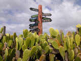 Signpost Standing Among Cactuses, Barbados, West Indies, Caribbean, Central America Photographic Print by Michael Runkel