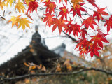 Autumn Maple Leaves at 16th Century Jojakko Ji Temple, Arashiyama Sagano Area, Kyoto, Japan Photographic Print by Christian Kober