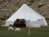 Tent Hotel, Tsomori, Ladakh, India, Asia Photographic Print by James Gritz
