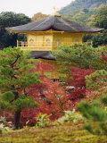 Autumn Colour Leaves, Golden Temple, Kinkaku Ji (Kinkakuji), Dating from 1397, Kyoto, Japan, Asia Photographic Print by Christian Kober