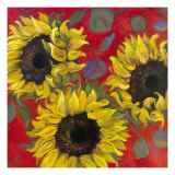 Sunflowers Prints by Shari White