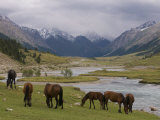 Wild Horses at River, Karkakol, Kyrgyzstan, Central Asia Photographic Print by Michael Runkel