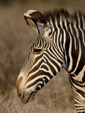 Grevy's Zebra (Equus Grevyi), Samburu National Reserve, Kenya, East Africa, Africa Photographic Print by James Hager