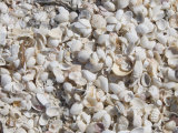 Beach Covered in Shells, Captiva Island, Gulf Coast, Florida, United States of America Photographic Print by Robert Harding