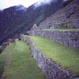 Llamas Eat Grass Near the Main Entrance of Machu Picchu, Peru, South America Photographic Print by Aaron McCoy