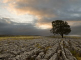 Lone Hawthorn Tree on Limestone Pavement Outside Malham, Yorkshire, England, United Kingdom, Europe Photographic Print by John Woodworth