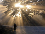 Man Walking Along a Street with Sun Rays Shining Through a Tree, Highlands, Myanmar Photographic Print by Michael Runkel