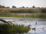 Danube River Delta, Romania, Europe, Photographic Print
