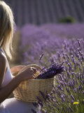 Woman in a Lavender Field, Provence, France, Europe Photographic Print by Angelo Cavalli