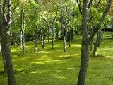 Moss Garden, Hakone Museum of Art, Koen-Kami, Gora, Hakone, West of Tokyo, Honshu, Japan Photographic Print by Tony Waltham