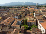 View of Lucca from Torre Guinigi, Lucca, Tuscany, Italy, Europe Photographic Print by Nico Tondini