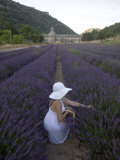 Woman in a Lavender Field, Senanque Abbey, Gordes, Provence, France, Europe Photographic Print by Angelo Cavalli
