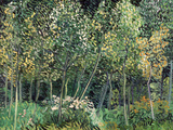 Small forest, July 1890 Posters by Vincent van Gogh