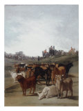 Sorting the Bulls Giclee Print by Francisco de Goya