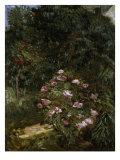 Massif de Fleurs, Jardin du Petit Gennevilliers, 1884 Prints by Gustave Caillebotte