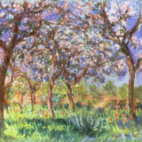 Printemps a Giverny, 1900 Reproduction procédé giclée par Claude Monet