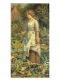 Of Herbs, and Other Country Messes, Which the Neat-Handed Phyllis Dresses Giclee Print by A. Hughes