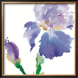 Iris Prints by Summer Thornton