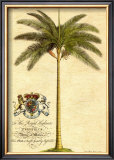 Date Palm Prints by Georg Dionysius Ehret