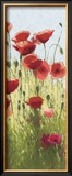 Mountain Poppies I Posters by Shirley Novak